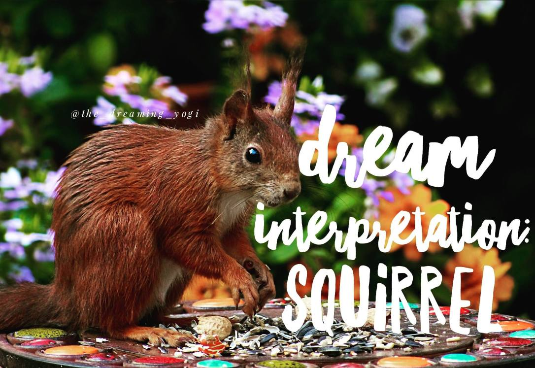 squirrel_dreams
