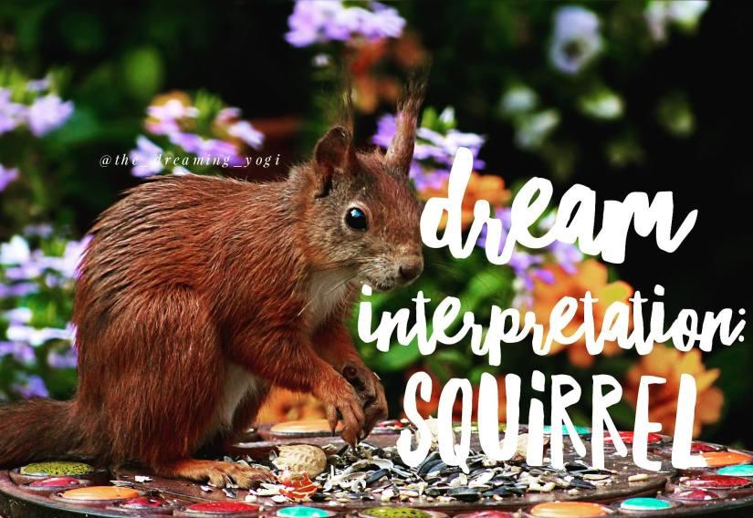 squirrel_dreams